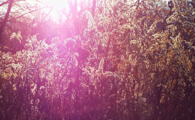 sun through grasses